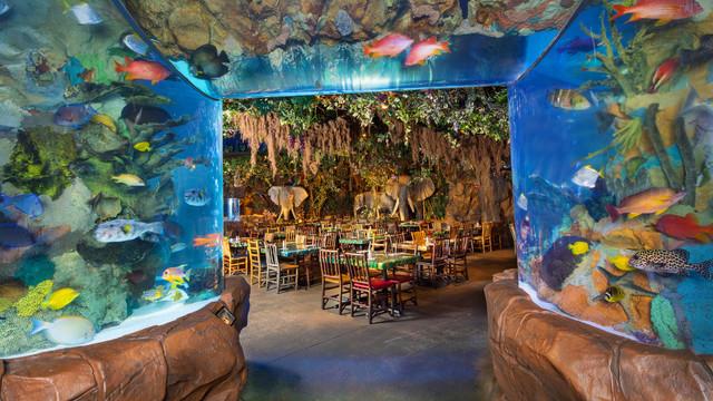 Rainforest Cafe WDW